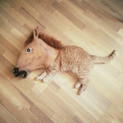 horse cat