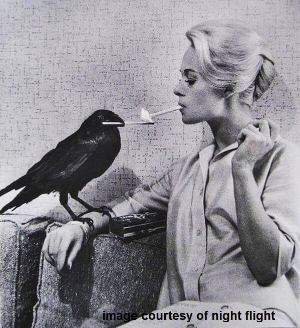 birdciggytippi