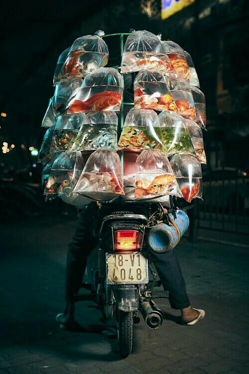 hanoifishonamotorcycle
